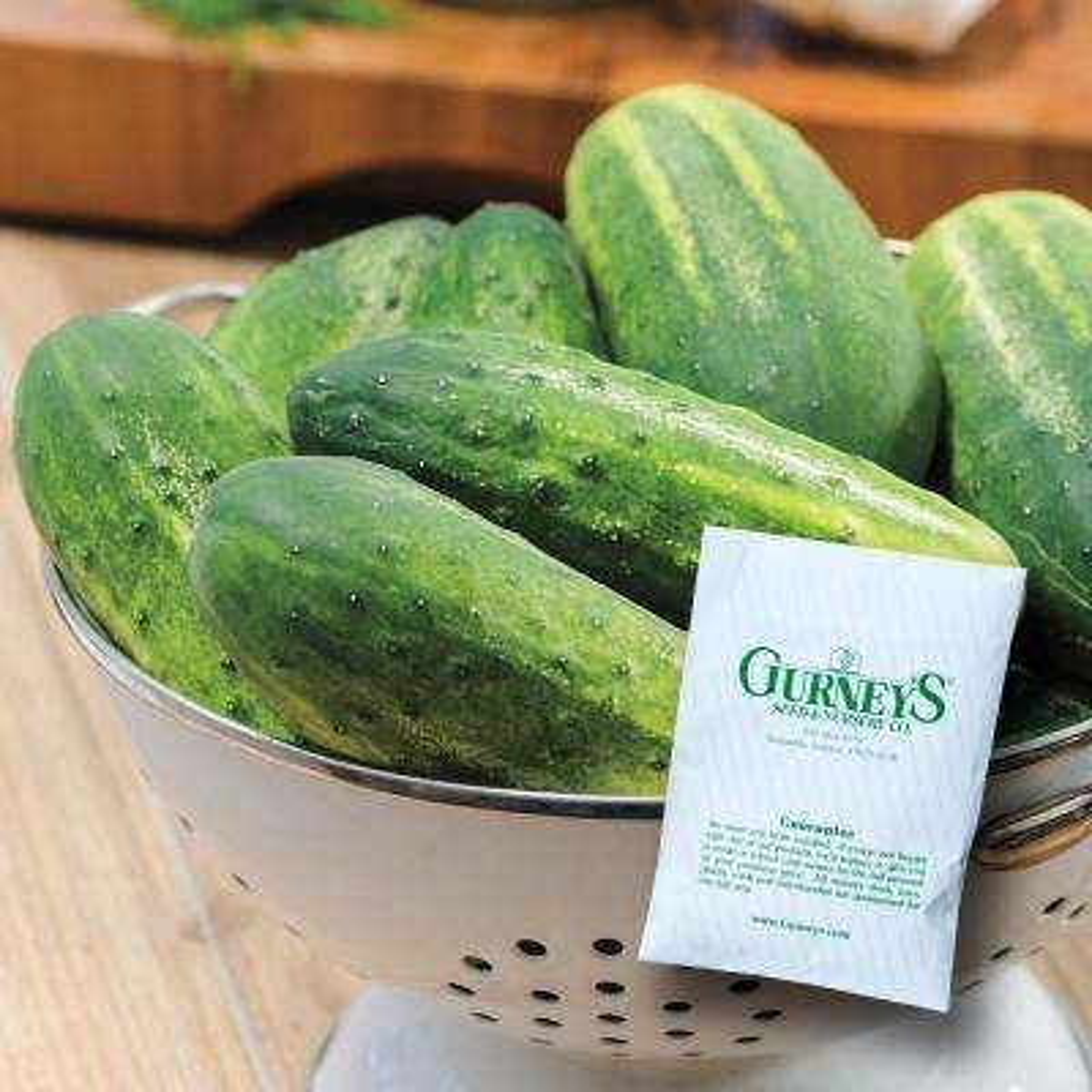 Cucumber Pickling Miss Pickler Hybrid (50 Seed Packet)