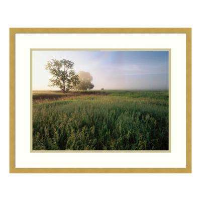 """Oak trees shrouded in fog"" by Tim Fitzharris Framed Wall Art"