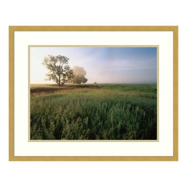 Amanti Art ''Oak trees shrouded in fog'' by Tim Fitzharris Framed