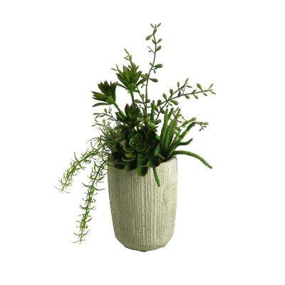 Indoor Mini Dracaena Heads, Succulents, Springeri and Easter Grass in Cement Cylinder