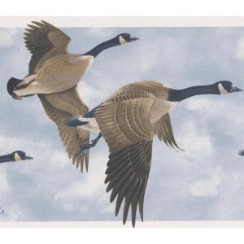 Beautiful Flying Ducks Blue Sky Prepasted Wallpaper Border