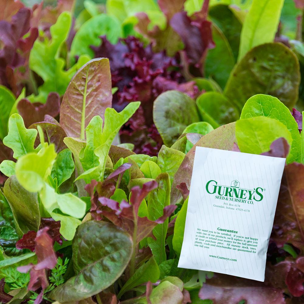 Lettuce Gurney's Premium Blend (1,000 Seed Packet)