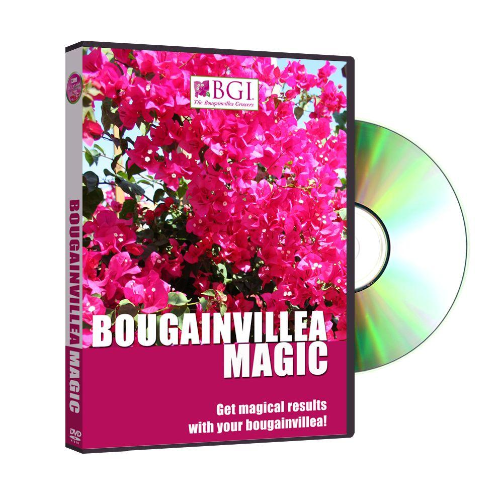 BGI Bougainvillea Magic DVD