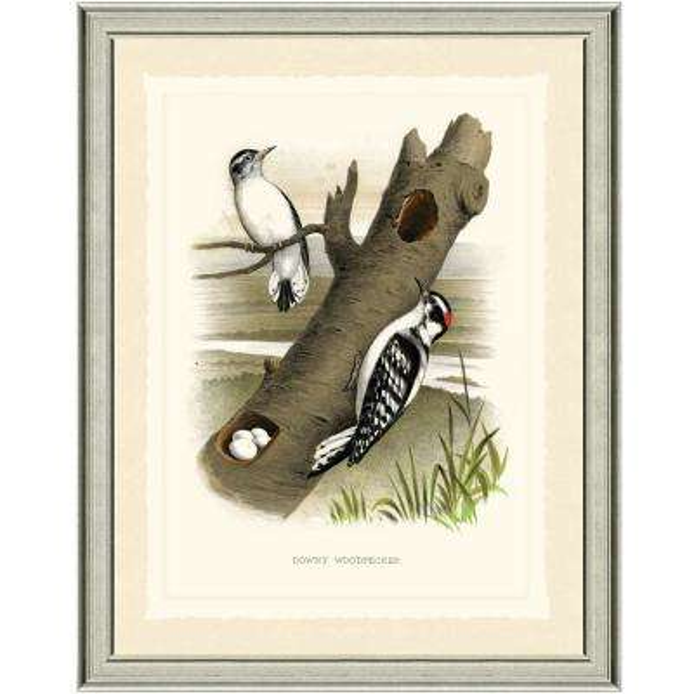 16 in. x 20 in. Woodpeckers Framed Archival Paper Wall Art