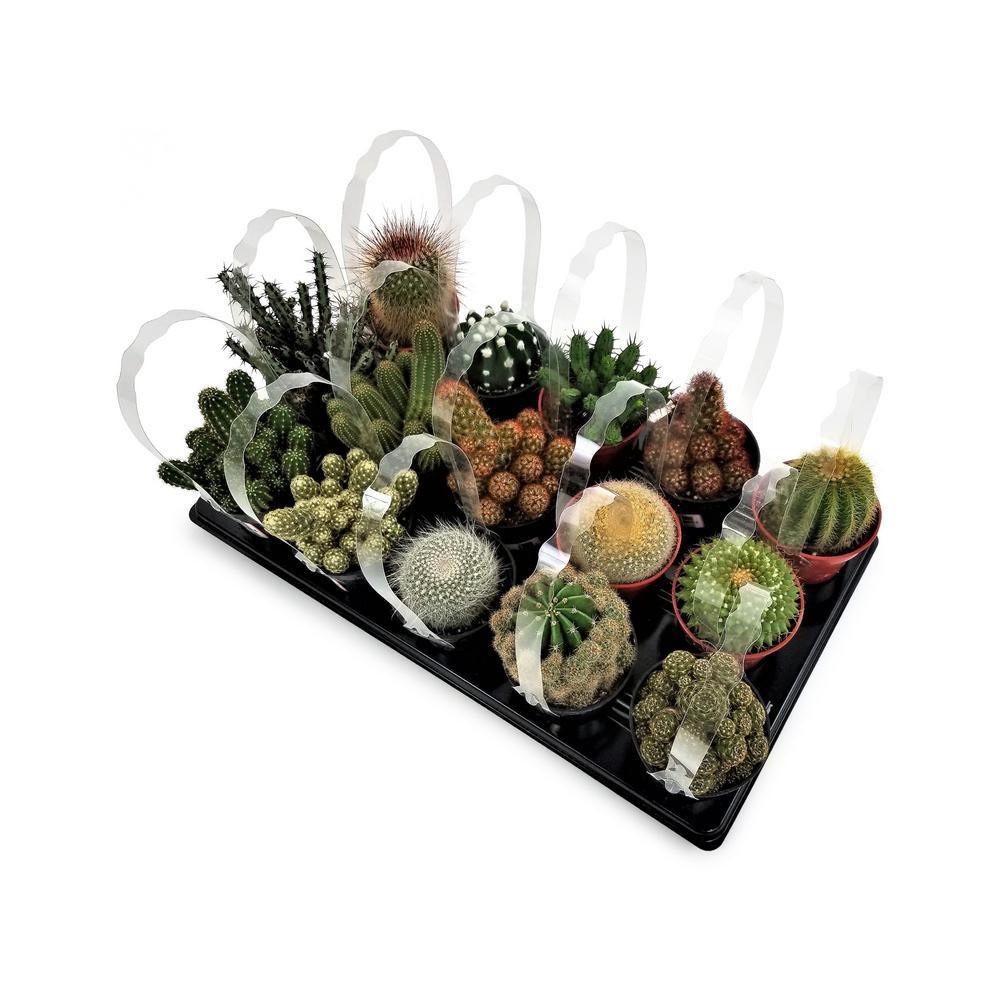 3.5 in. Cactus Mix (15-Plants)