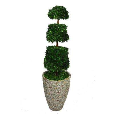 58 in. Tall Preserved Natural Spiral Boxwood Cone Topiary in 16 in. Fiberstone Planter