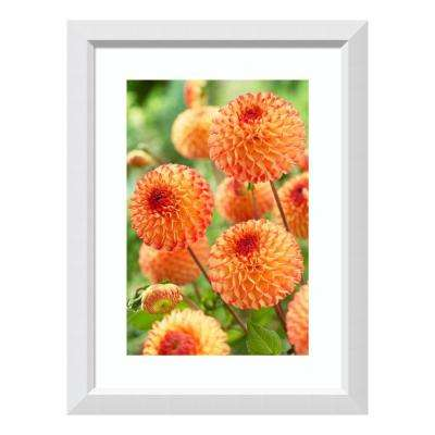 """Dahlia mirella variety flowers"" by Visionspictures Framed Wall Art"