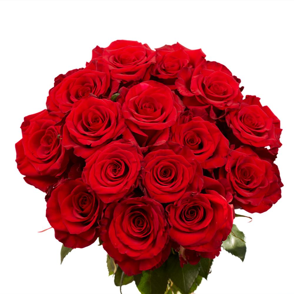 fresh dark red color roses 250 stems - Red Garden Rose Bouquet