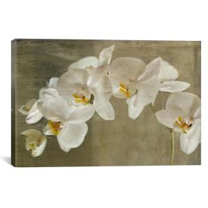 ''Painted Orchid'' by Symposium Design Canvas Wall Art
