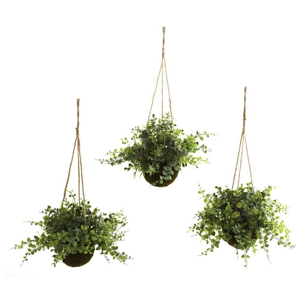 Eucalyptus, Maiden Hair and Berry Hanging Basket (Set of 3)