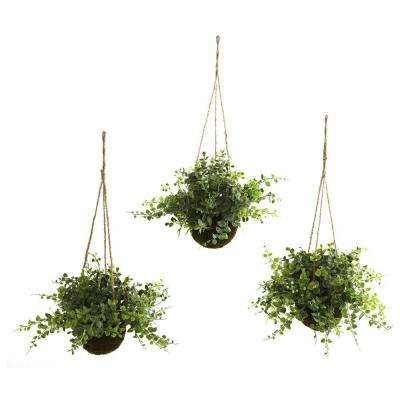 Eucalyptus, Maiden Hair and Berry Hanging Basket (Set of 3)