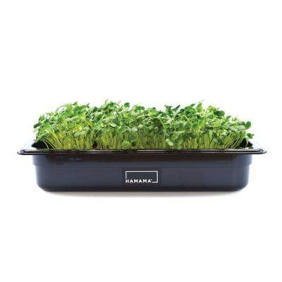 Microgreens Kit with Radish, Salad Mix and Kale