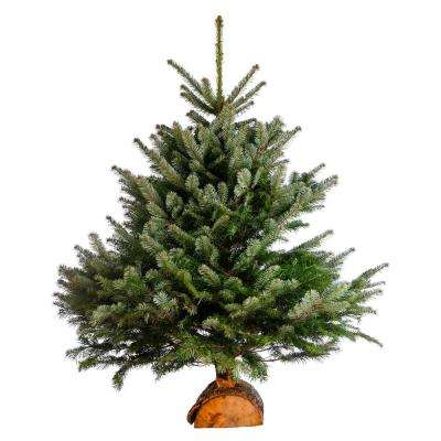 3 ft. to 4 ft. Freshly Cut Turkish Fir Live Christmas Tree (Real, Natural, Oregon-Grown)