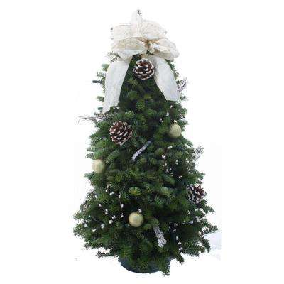 28 in. Balsam Winter Elegance Fresh Tabletop Tree Arrangement : Multiple Ship Weeks Available