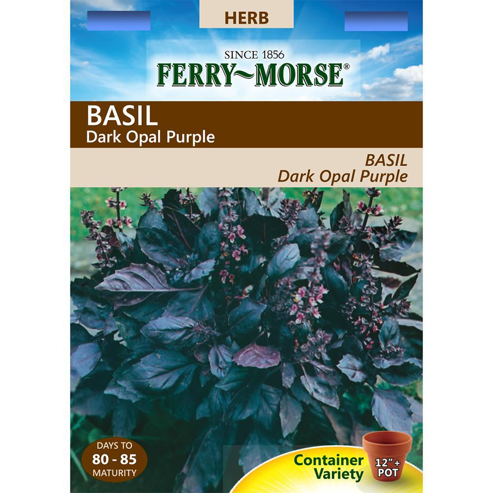 50//1600 Seeds NT Basil Purple Beautiful Foliage Aromatic Herb Opal