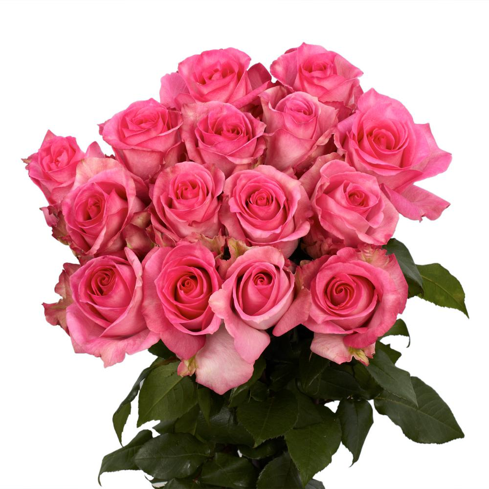 Globalrose Fresh Pink Color Roses 250 Stems Attache 250 The Home