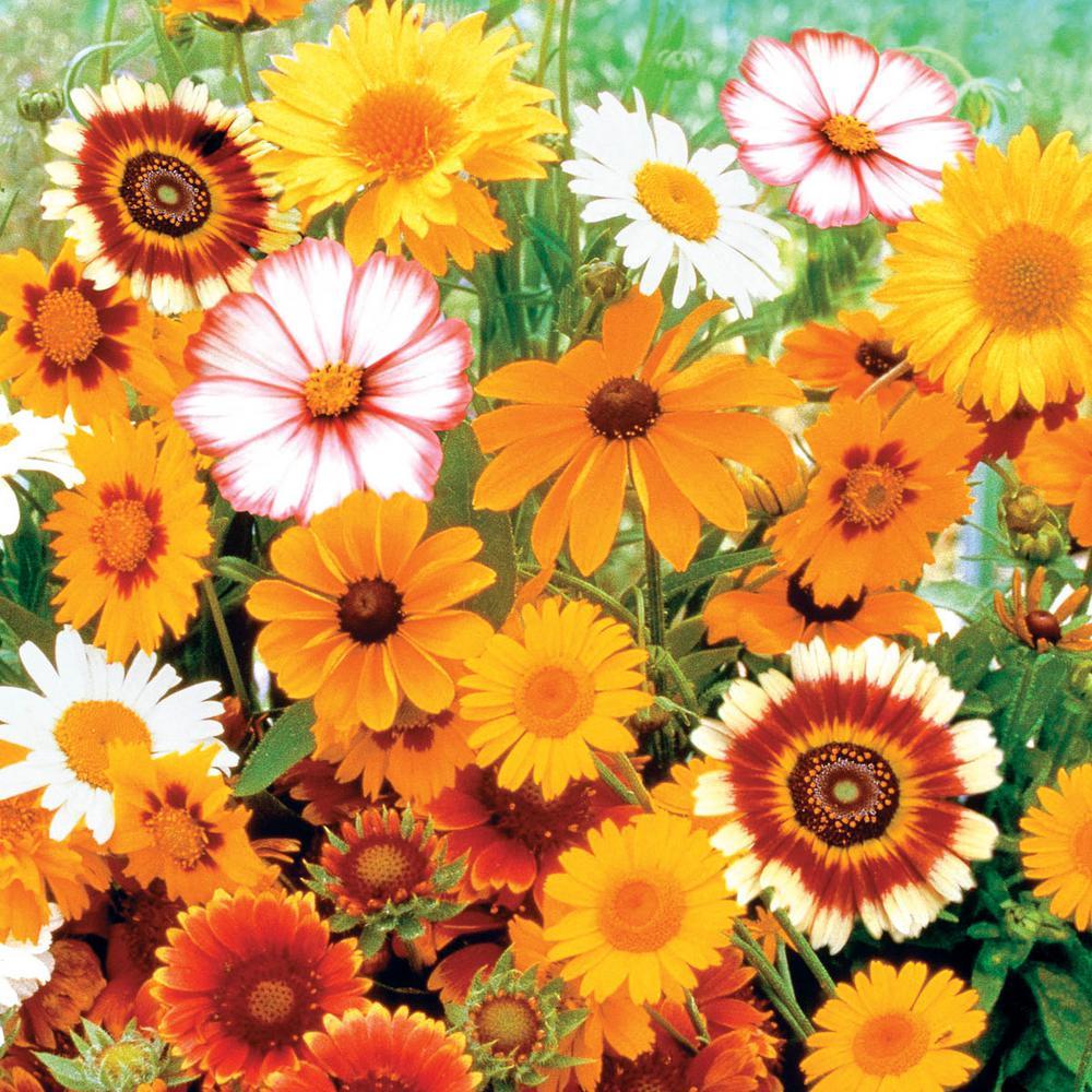 Sun Loving Flowering Seed Mixture (150-Seed Packet)