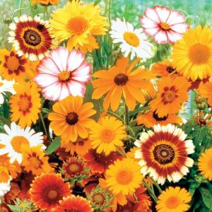 Sun Loving Flowering Seed Mixture (150-Seed Packet)