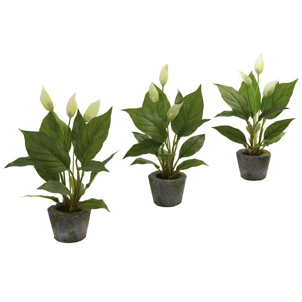Nearly Natural Spathyfillum with Cement Planter (Set of 3)