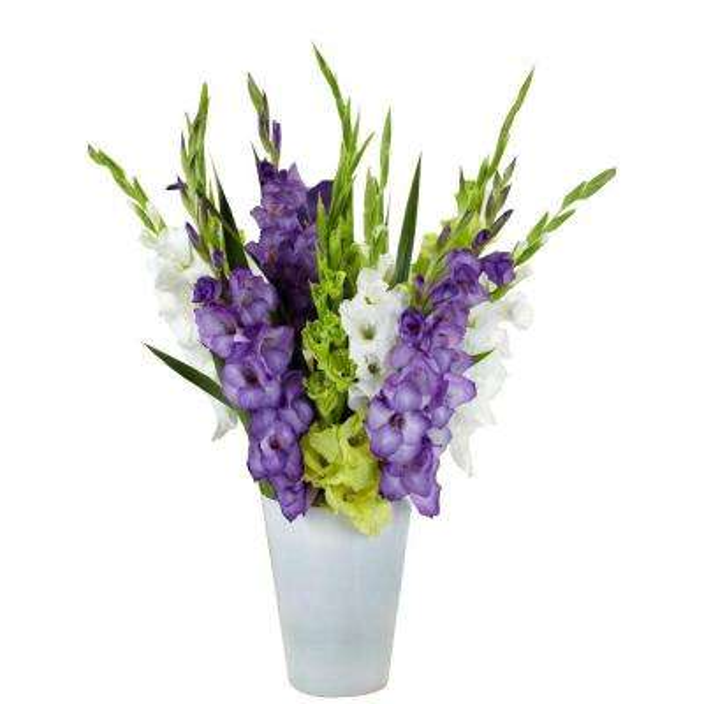 Gladiolus Gemstones of the Garden Bulbs Blend (25-Pack)
