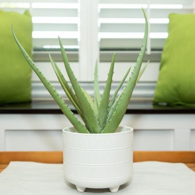 14 in. Artificial Aloe in 6 in. Barcode Footed Ceramic Pot
