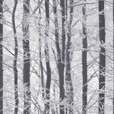 Frosted Wood Silver Paper Strippable Wallpaper (Covers 57.26 sq. ft.)