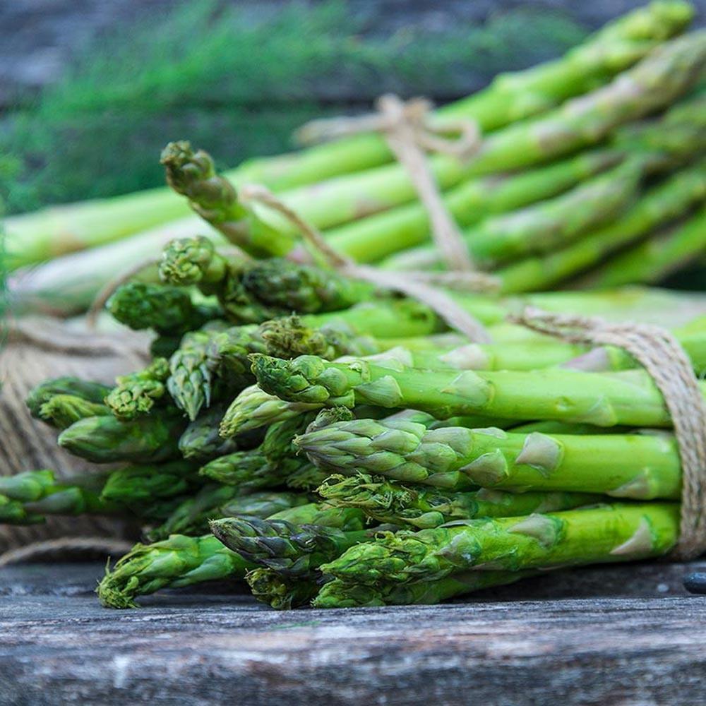 Gurney's Asparabest Medium Asparagus Live Bareroot ...