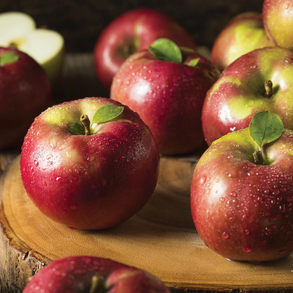 Apple Tree - McIntosh - 1 Root Stock