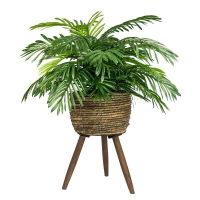 30 in. Phoenix Palm in Basket Stand