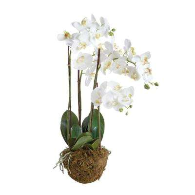30 in. Poly and Plastic Drop in Phalaenopsis