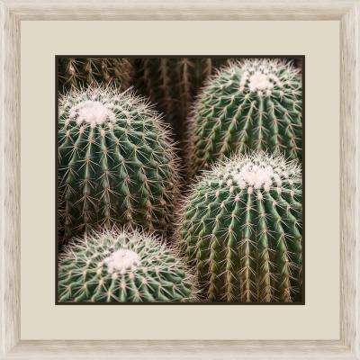 "30 in. x 30 in. ""Cactus Bloom II"" Framed Photographic Print"