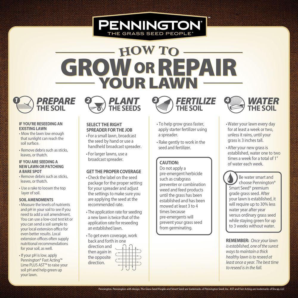 Pennington 25 Lb Annual Ryegr Gr Seed 100082633 The Home