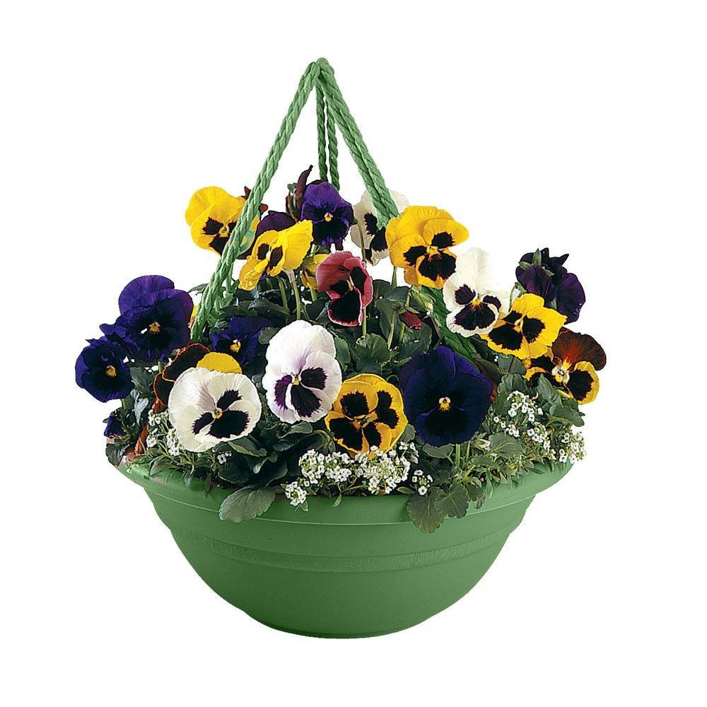 17 x 6.5 Living Green Milano Plastic Hanging Basket