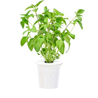 Thai Basil Refill for Smart Herb Garden (3-Pack)