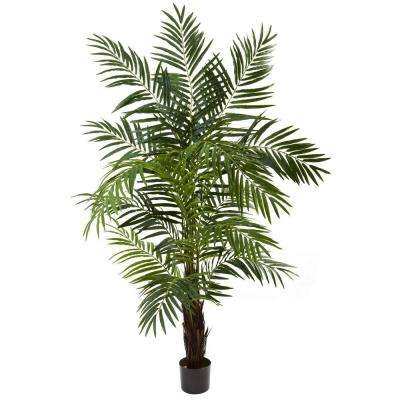 6 ft. Areca Palm Tree