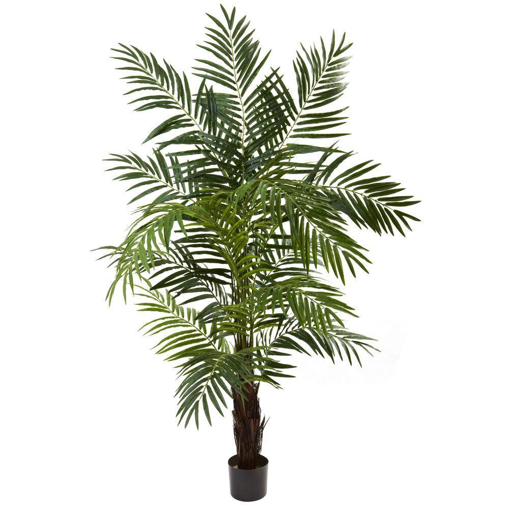 6 ft. Areca Palm Tree