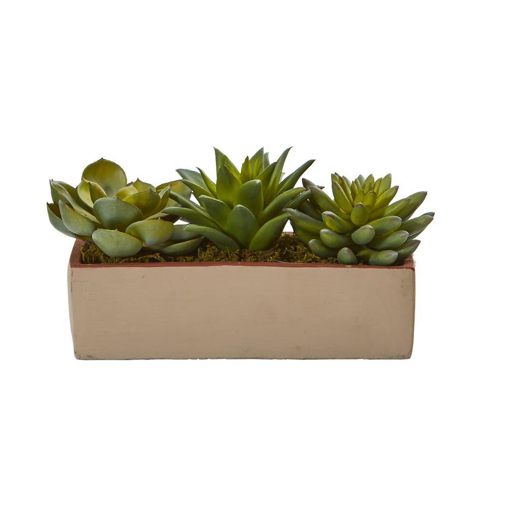 5 in. Indoor Mixed Succulent Pot