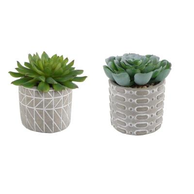 4 in. Set of 2 Succulent in Pattern Cement Pot