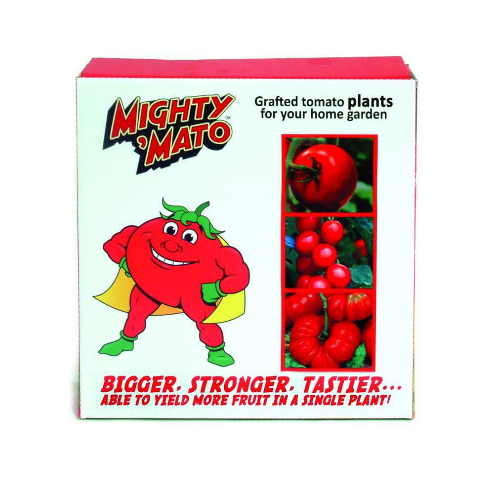 Mighty 'Mato Grafted Tomato Variety Pack - Contains 1 Each - Big Beef, Brandywine Red,Sweet Million-DISCONTINUED