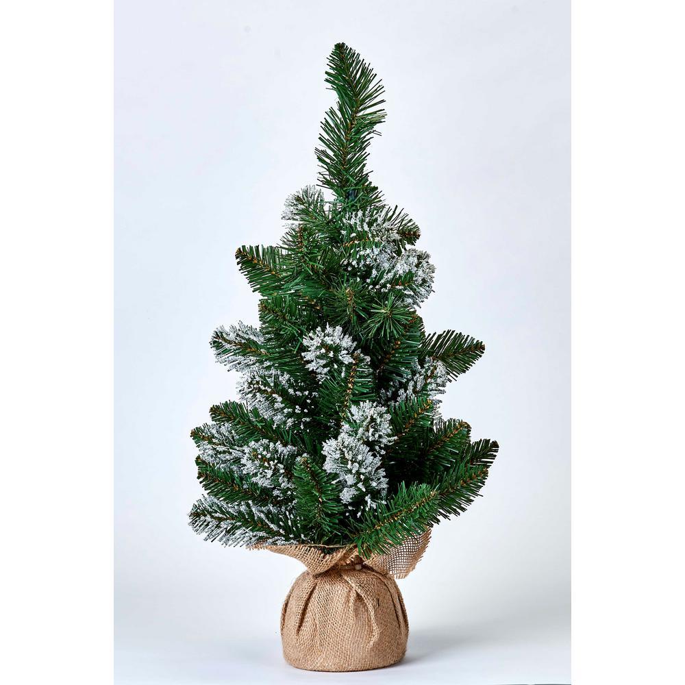 24 in. White Tip Pine Tree in Burlap Sack