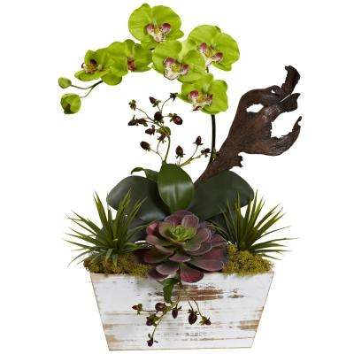 21 in. Orchid and Succulent Garden with White Wash Planter in Green