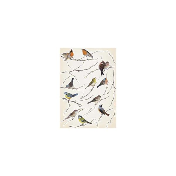 Birds Multicolored Animals Wall Decals