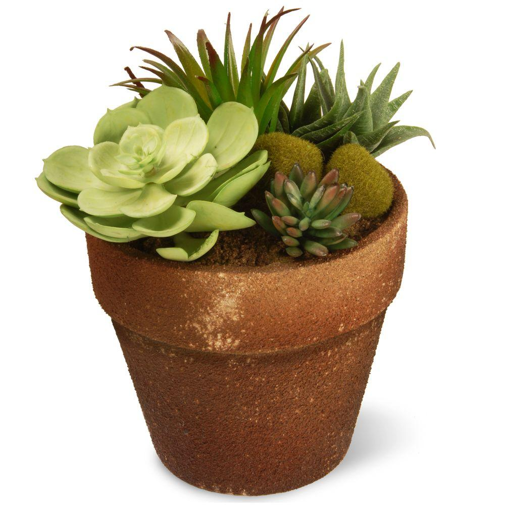 National Tree 7.8 in. Garden Accents Succulent Plant