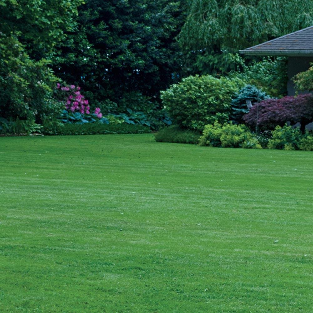 Gardens Alive! 6 lbs. Turf Alive Grass Seed with Rhizomes