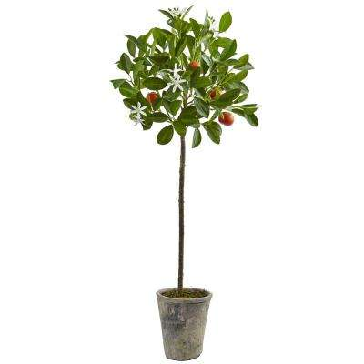 38 in. Potted Orange Tree