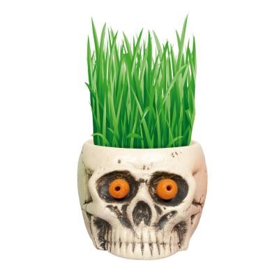 1 Qt. Hair Growing Halloween White Skull Kit Barley Grass