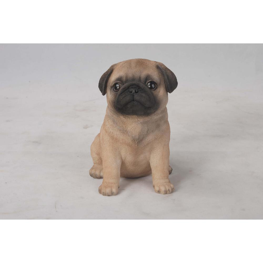Pug Dog Breed Information, Pictures