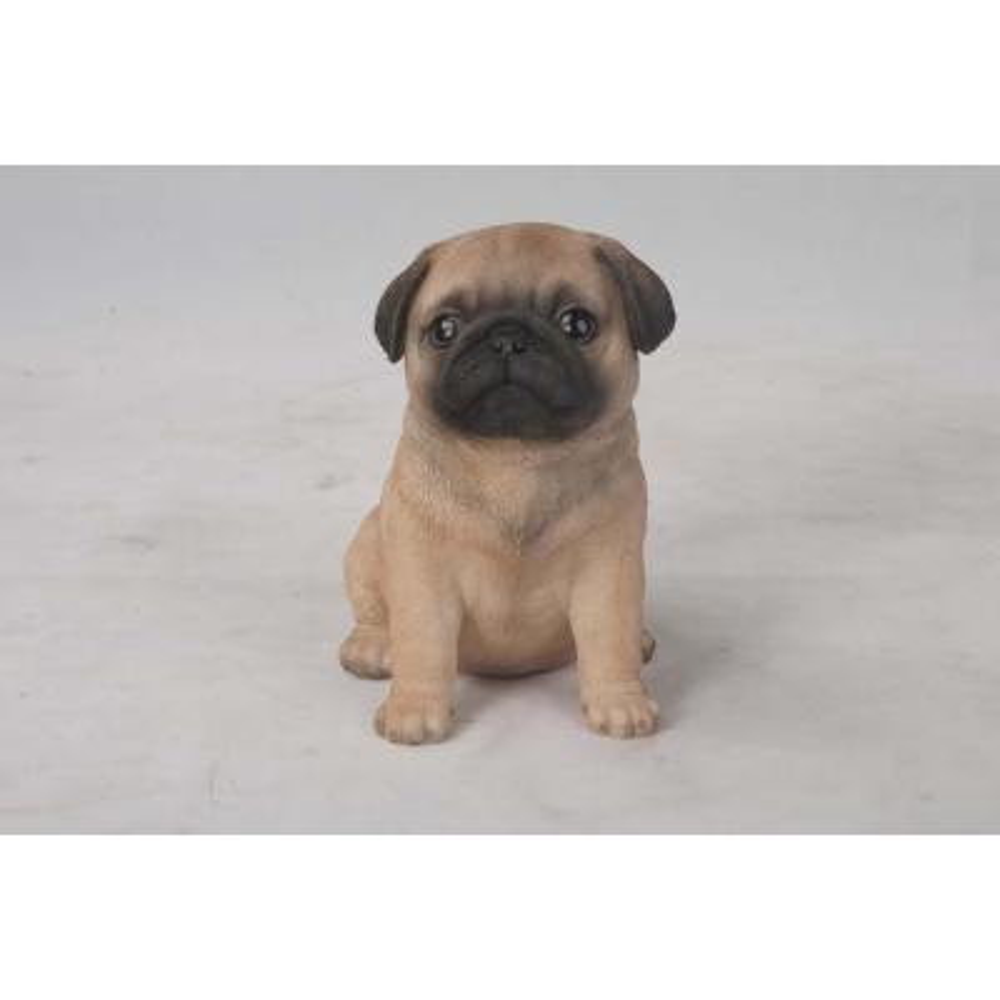 Pug Puppy Seated