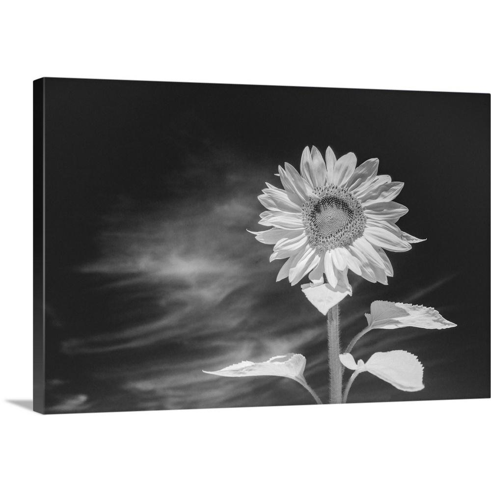 Infrared sunflower by tony sweet canvas wall art