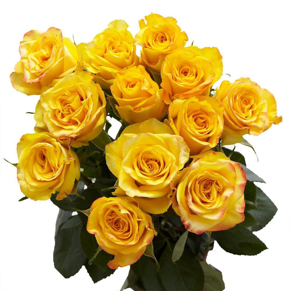 Globalrose 2 Dozen Yellow Roses Vars 2 Dozen Yellow Roses The Home